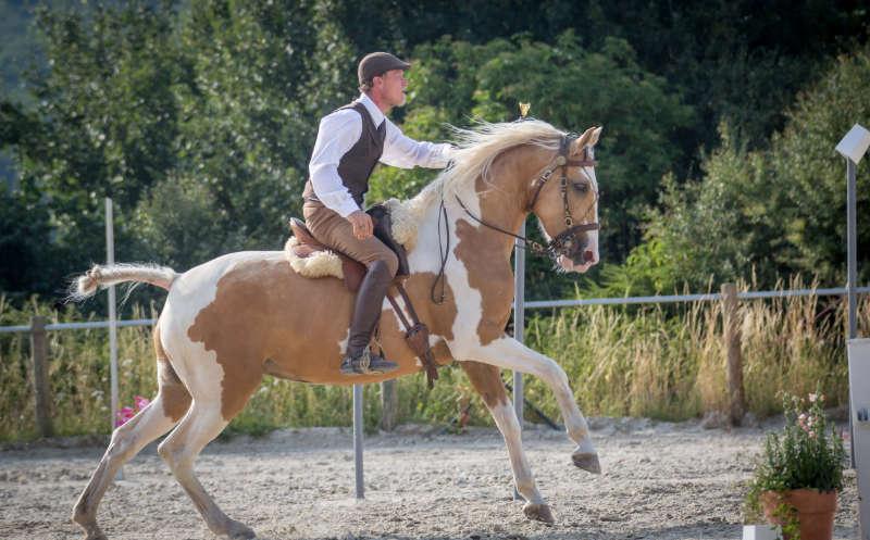 Working Equitation! Eine Reitdisziplin für mehr Bindung und Vertrauen 5