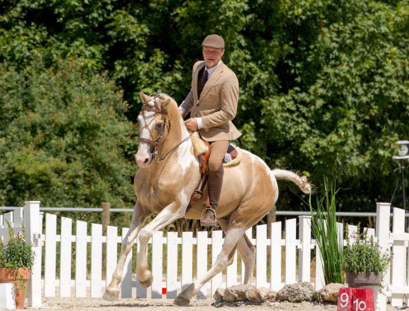 Working Equitation! Eine Reitdisziplin für mehr Bindung und Vertrauen 1