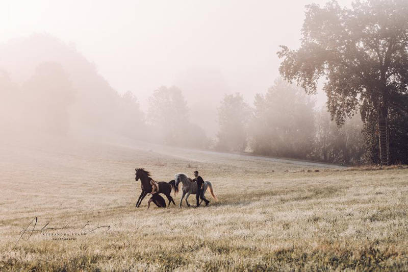 Die besten Tipps und Tricks für schöne Pferdefotos 3