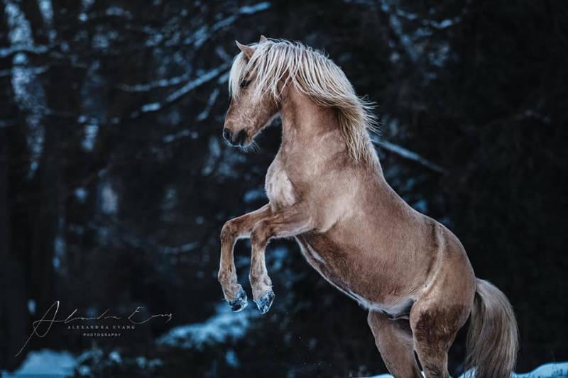 Die besten Tipps und Tricks für schöne Pferdefotos 4