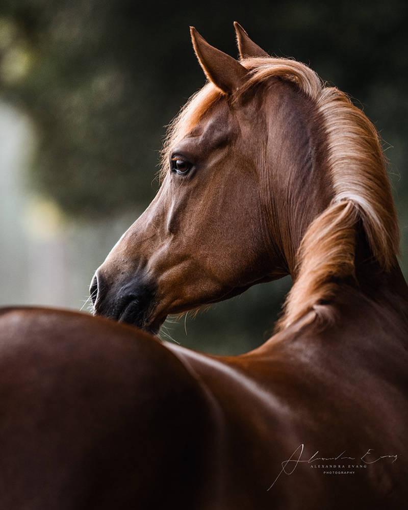 Die besten Tipps und Tricks für schöne Pferdefotos 13