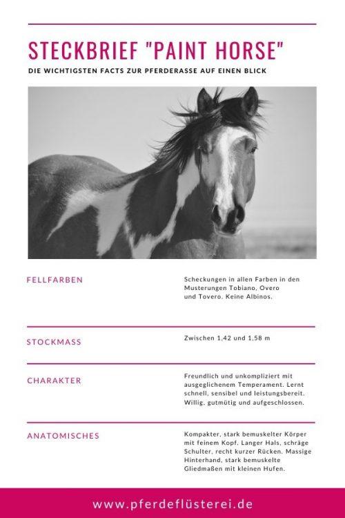 Paint Horse 4