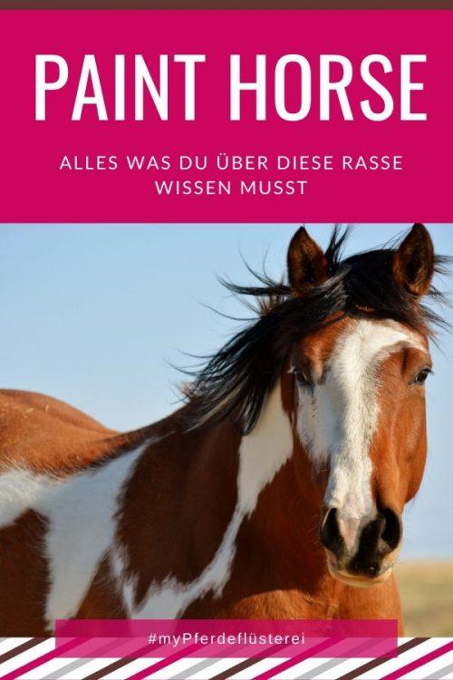 Paint Horse 3
