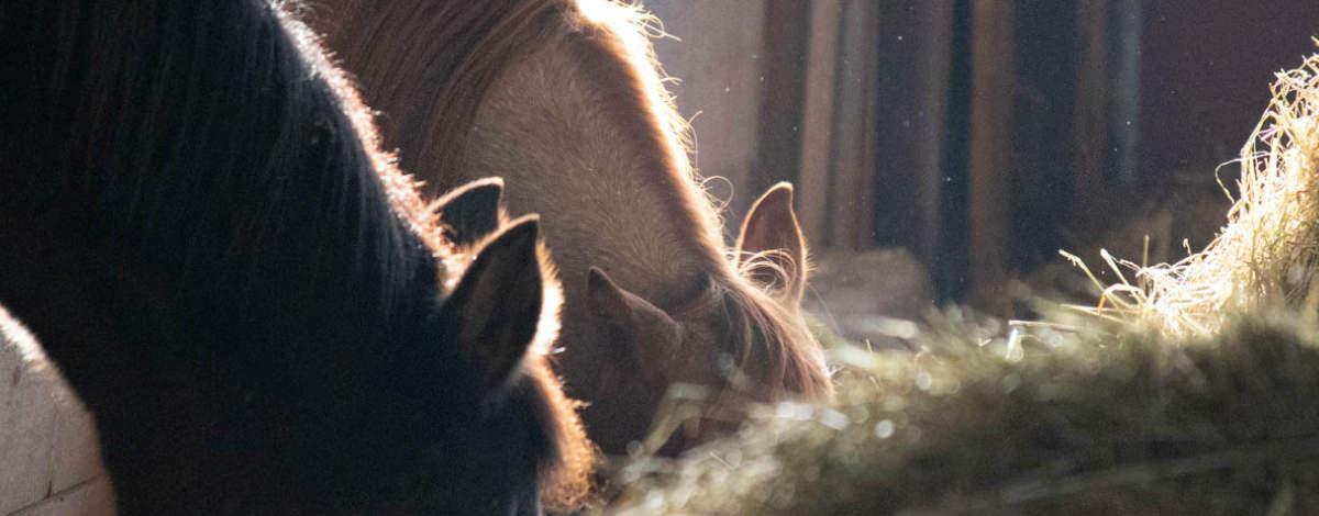 Dickes Pferd! Was du wirklich tun kannst damit dein Pferd abnimmt 5