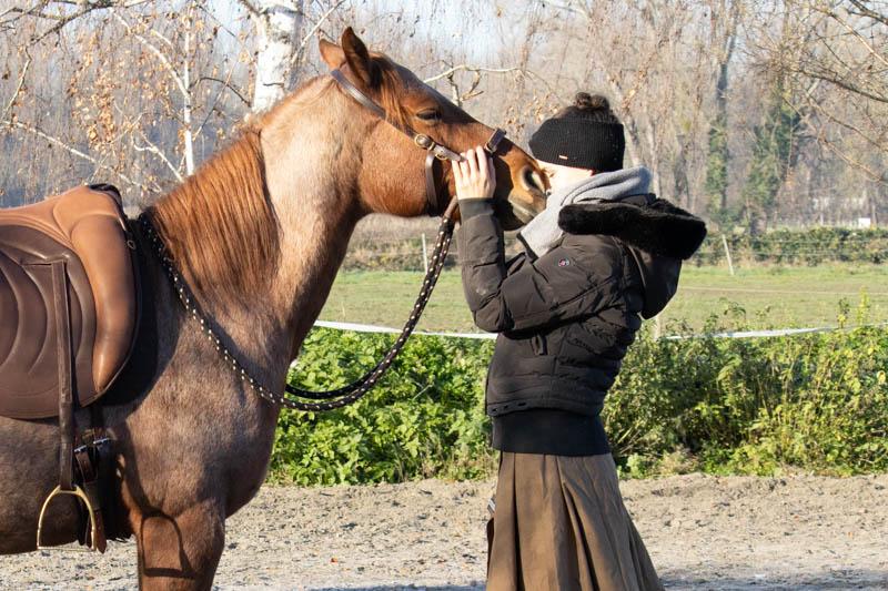 Führtraining mit dem Pferd! So gelingt dein Einstieg 3