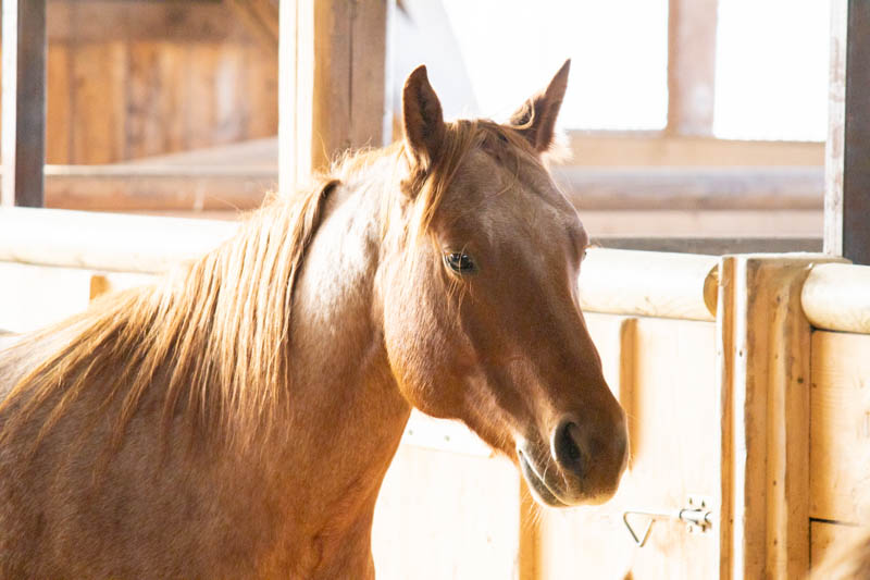 Feine Grunderziehung! Schritt für Schritt zu einem höflichen Pferd 4