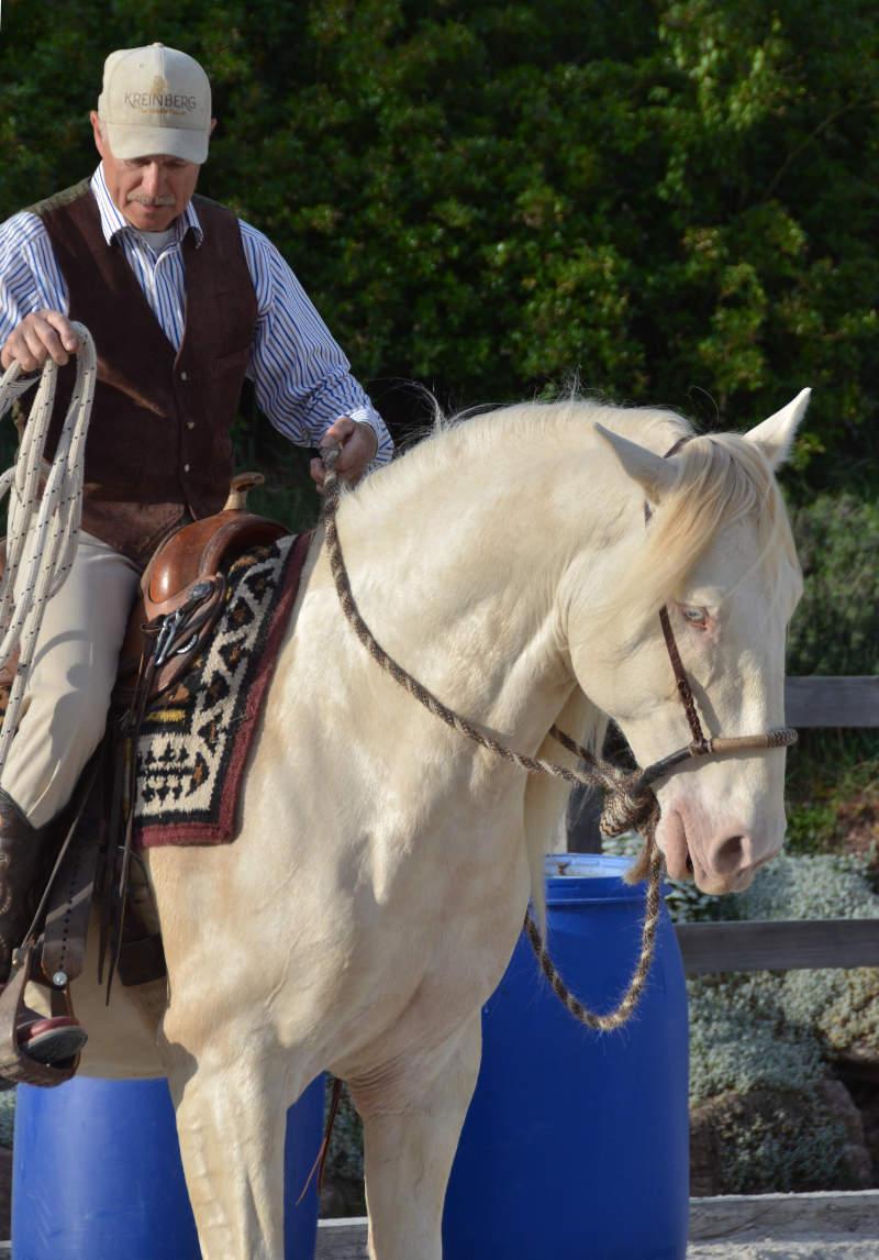 """Harmonie mit dem Pferd: Wie der """"sanfte Touch"""" dir dabei helfen kann 3"""