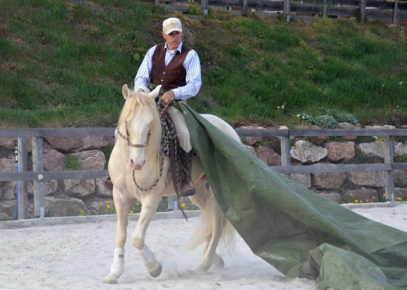 Was einen guten Umgang mit dem Pferd ausmacht 4