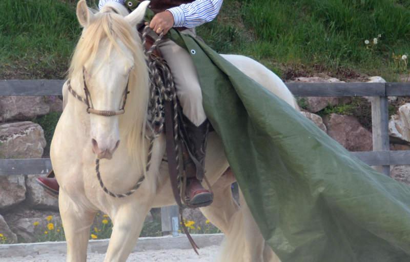 Was einen guten Umgang mit dem Pferd ausmacht 6