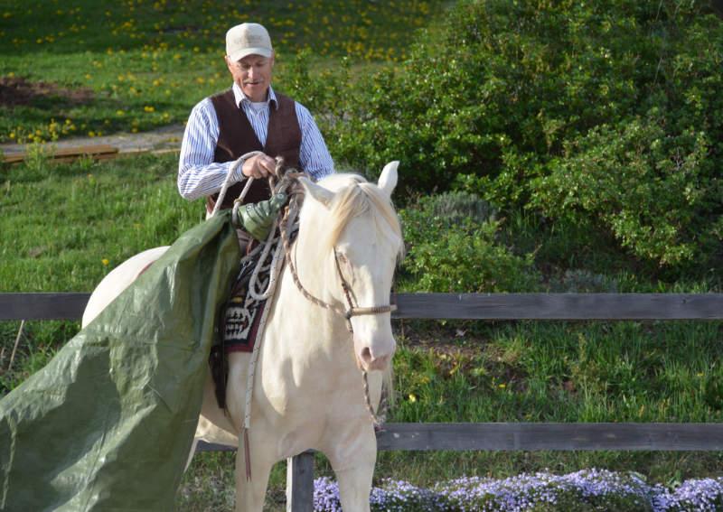 """Harmonie mit dem Pferd: Wie der """"sanfte Touch"""" dir dabei helfen kann 7"""
