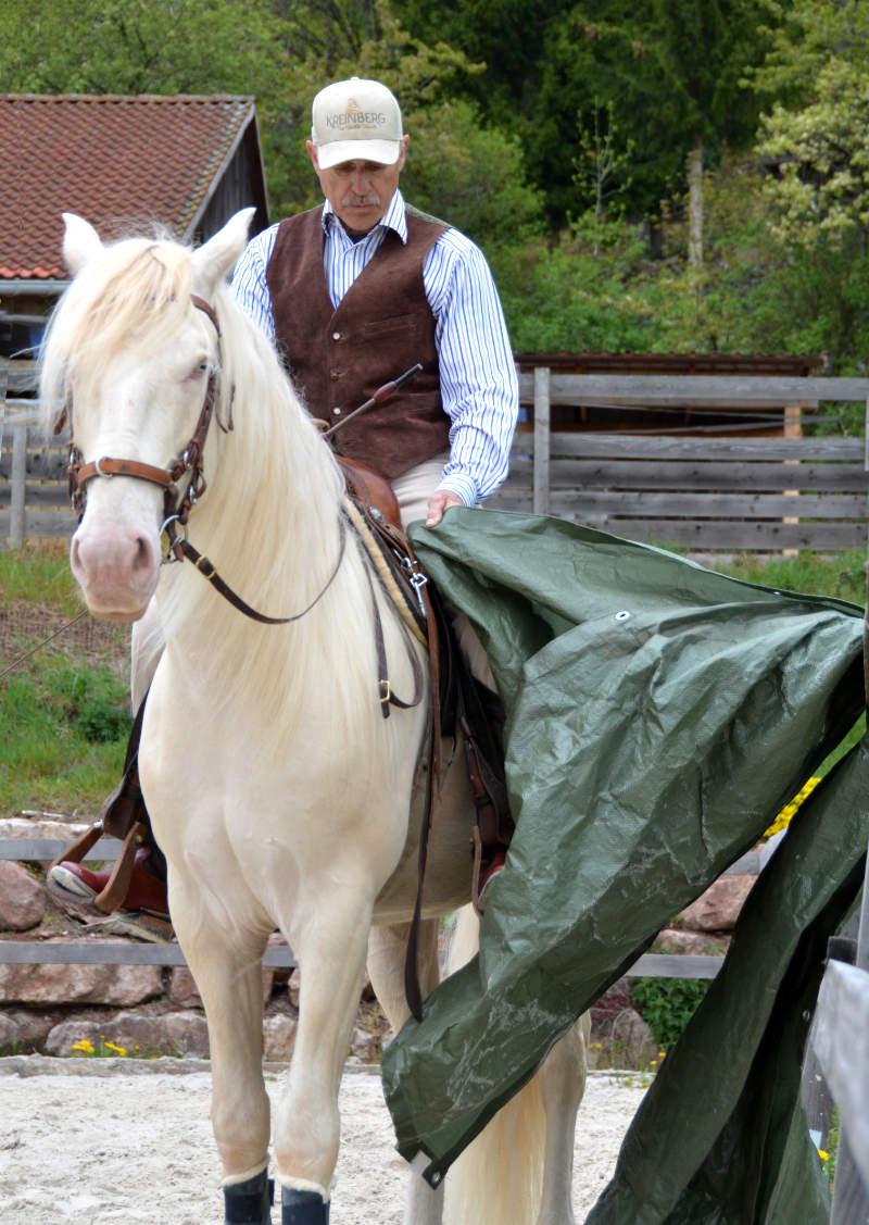 """Harmonie mit dem Pferd: Wie der """"sanfte Touch"""" dir dabei helfen kann 4"""