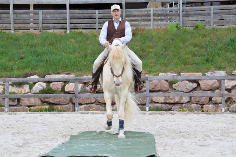 """Harmonie mit dem Pferd: Wie der """"sanfte Touch"""" dir dabei helfen kann 6"""