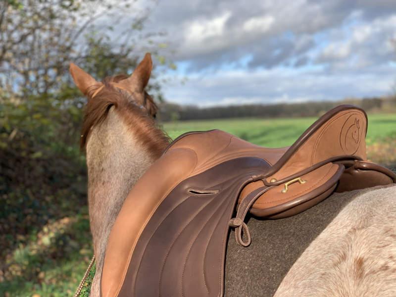 Pferde reiten! Warum das keine Selbstverständlichkeit ist 4