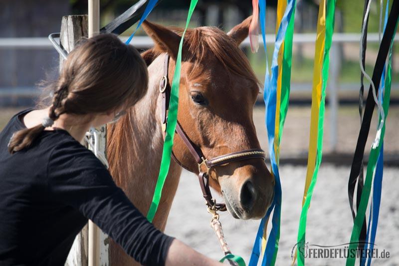 6 Tipps für ein stressfreies Silvester für dein Pferd 4