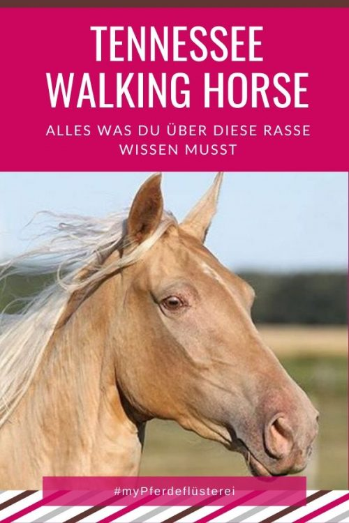Tennessee Walking Horse 5