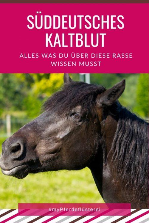 Süddeutsches Kaltblut 3