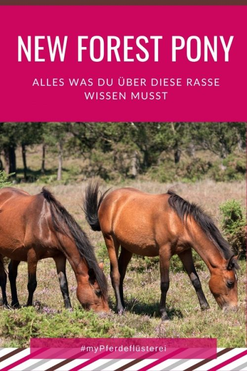 New Forest Pony 2