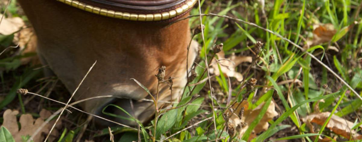 Grasen-pferd-Nase_slider