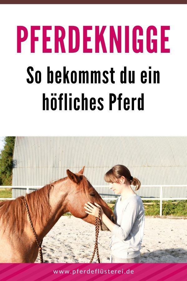 Feine Grunderziehung! Schritt für Schritt zu einem höflichen Pferd 2
