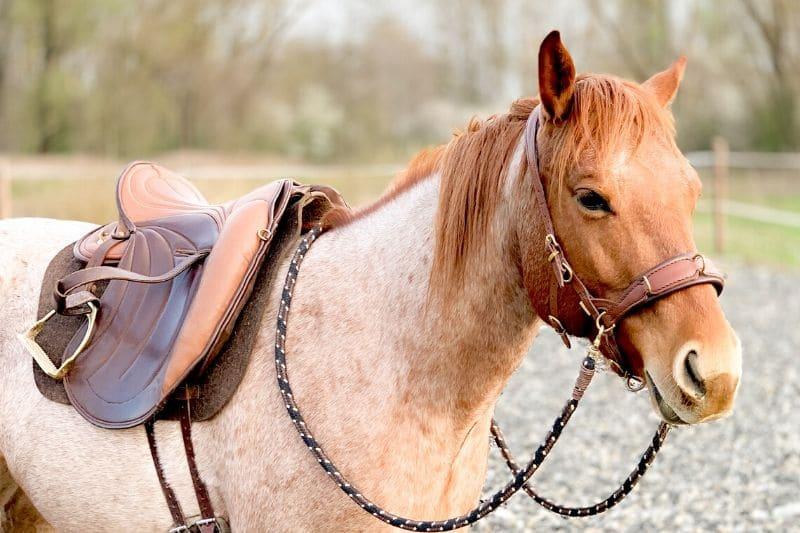 Wie du wirklich erfolgreich mit deinem Pferd trainieren kannst 1
