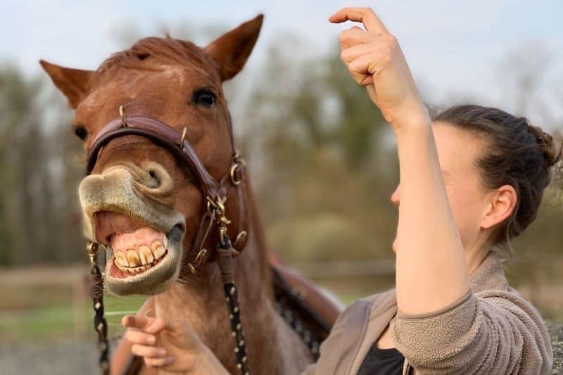 Wie du wirklich erfolgreich mit deinem Pferd trainieren kannst 3