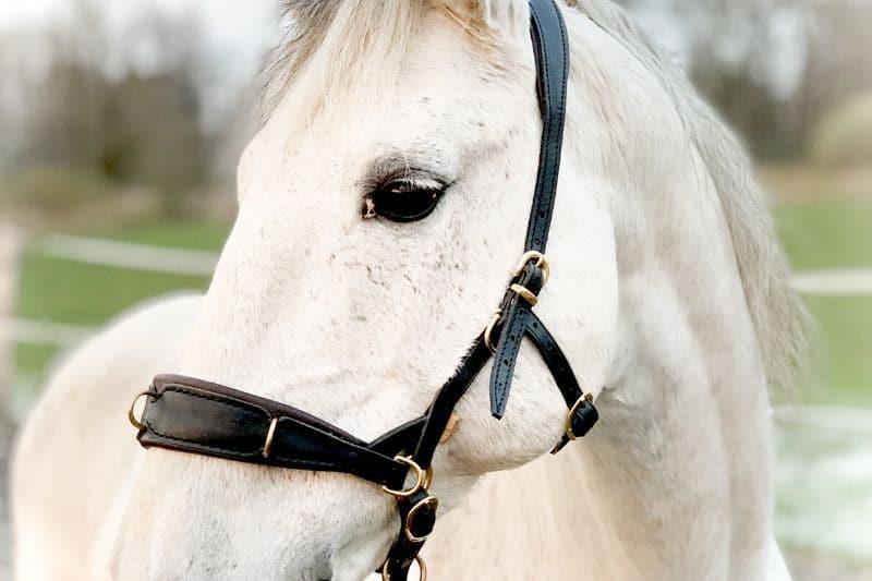 Wie du wirklich erfolgreich mit deinem Pferd trainieren kannst 4