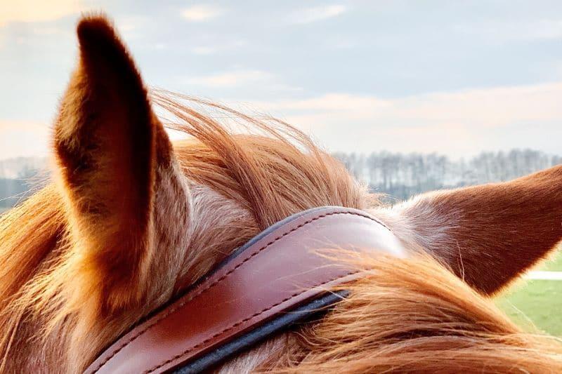 Wie du wirklich erfolgreich mit deinem Pferd trainieren kannst 11