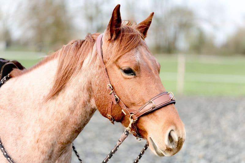 Wie du wirklich erfolgreich mit deinem Pferd trainieren kannst 10