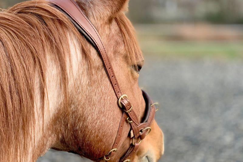 Wie du wirklich erfolgreich mit deinem Pferd trainieren kannst 8