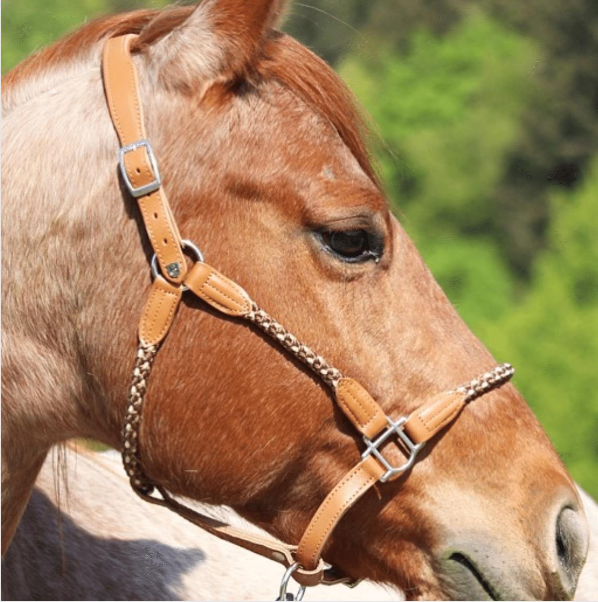 Führtraining mit dem Pferd! So gelingt dein Einstieg 5