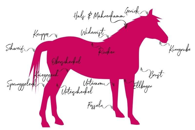 Anatomie vom Pferd