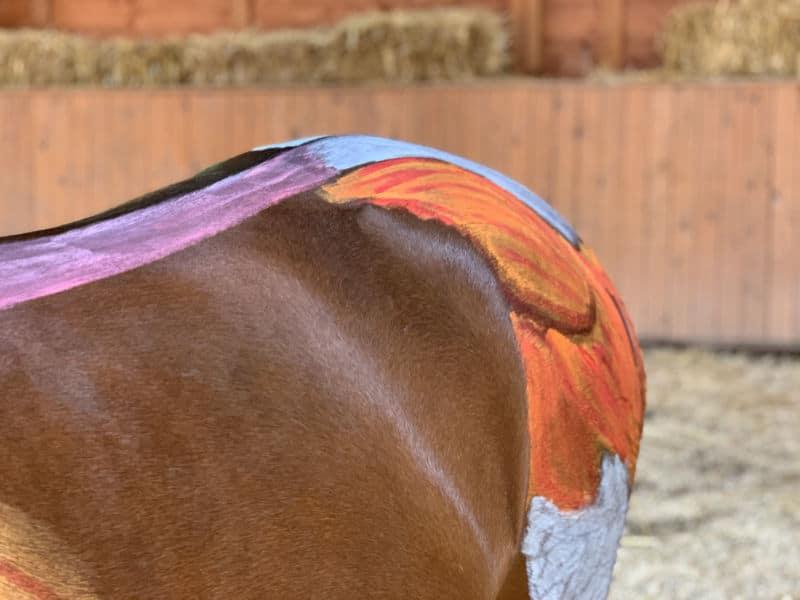 Anatomie vom Pferd! Alle Basics von Kopf bis Huf 4