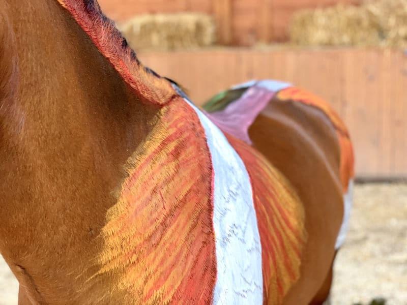 Anatomie vom Pferd! Alle Basics von Kopf bis Huf 1