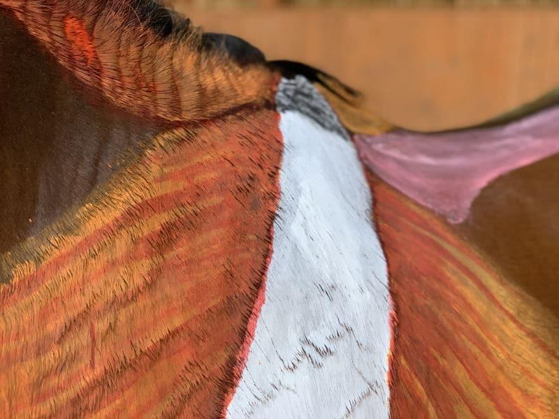 Anatomie vom Pferd! Alle Basics von Kopf bis Huf 3