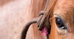 Traumpferd finden: Wie du das perfekte Pferd findest 5