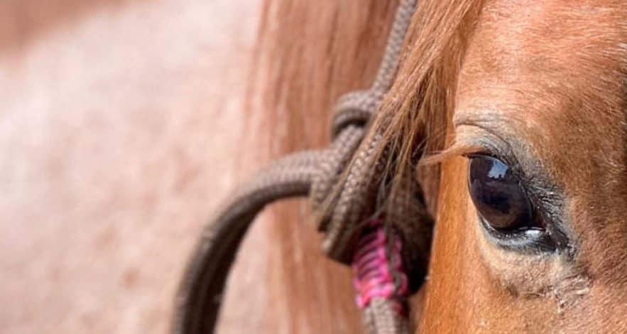 Traumpferd finden: Wie du das perfekte Pferd findest 4