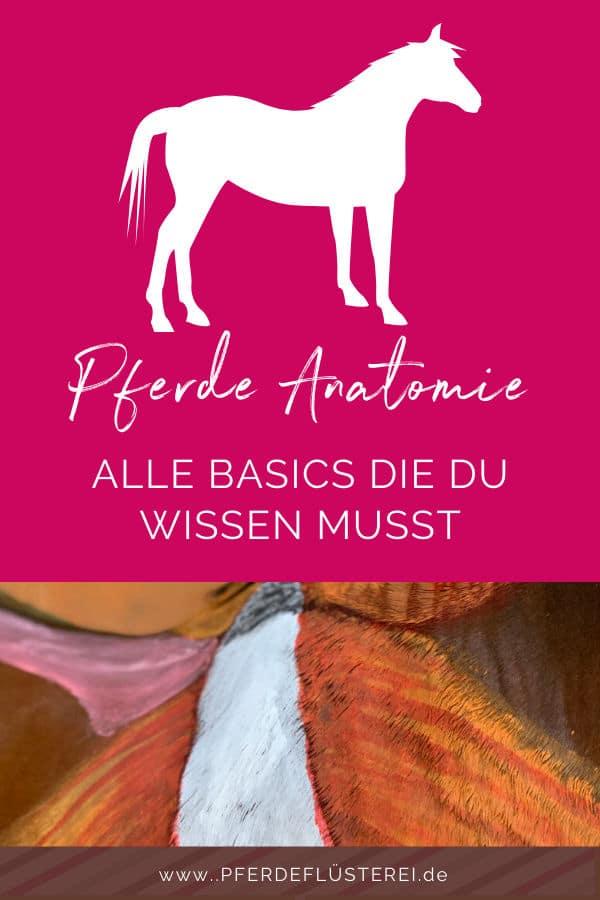 Anatomie vom Pferd! Alle Basics von Kopf bis Huf 2