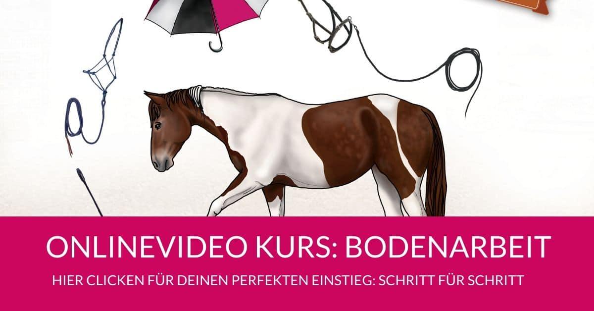 Spielerische Bodenarbeit mit dem Pferd: 3 Übungen mit Funfaktor 6