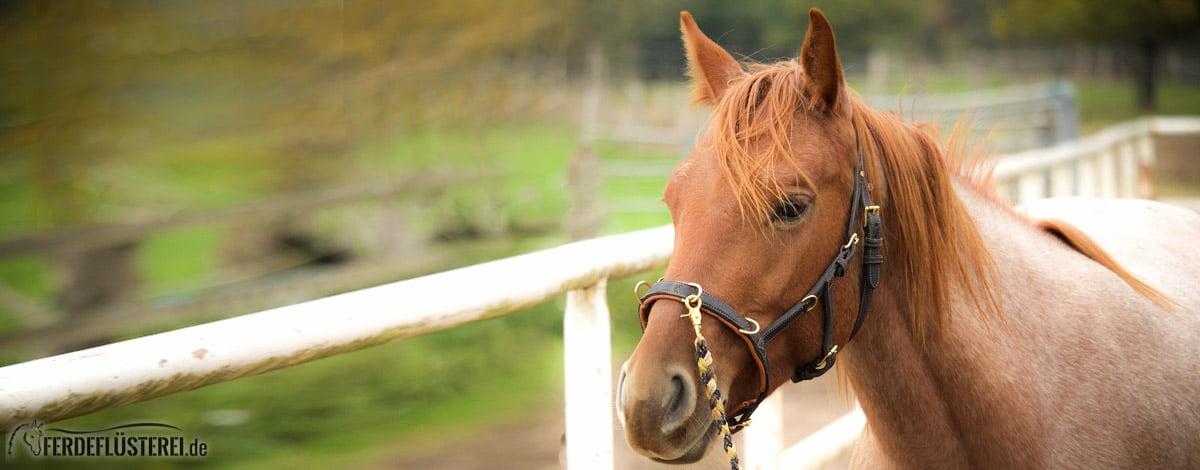 Pferdefluesterei-1