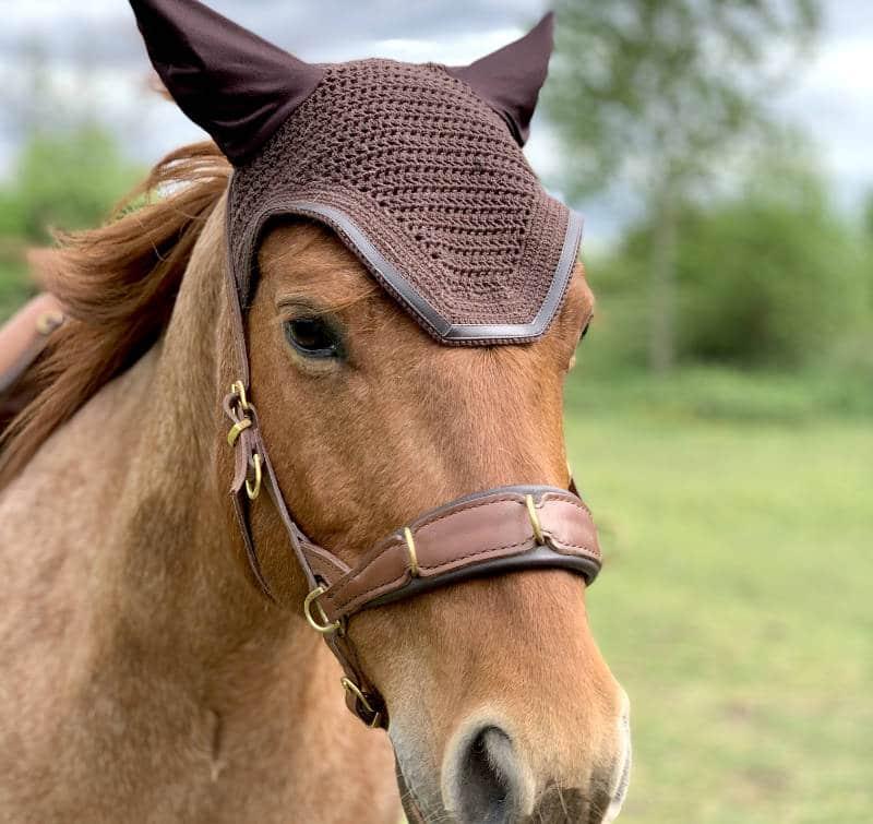 Horsenality: Wie du die Persönlichkeit deines Pferdes besser einschätzen kannst 1