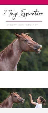 Pferdeflüsterei.de - Weil dein Pferd dich dafür lieben wird. 7