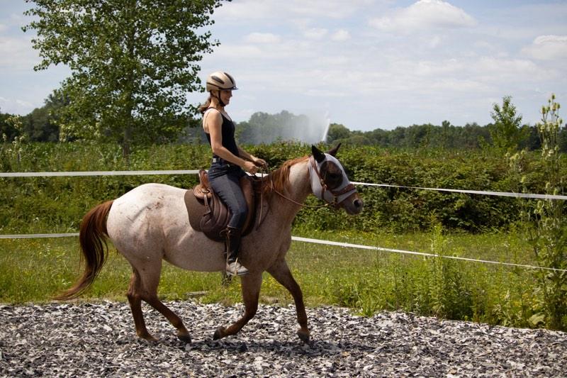Beziehung zum Pferd aufbauen: 5 Tipps zur Beziehungspflege 5