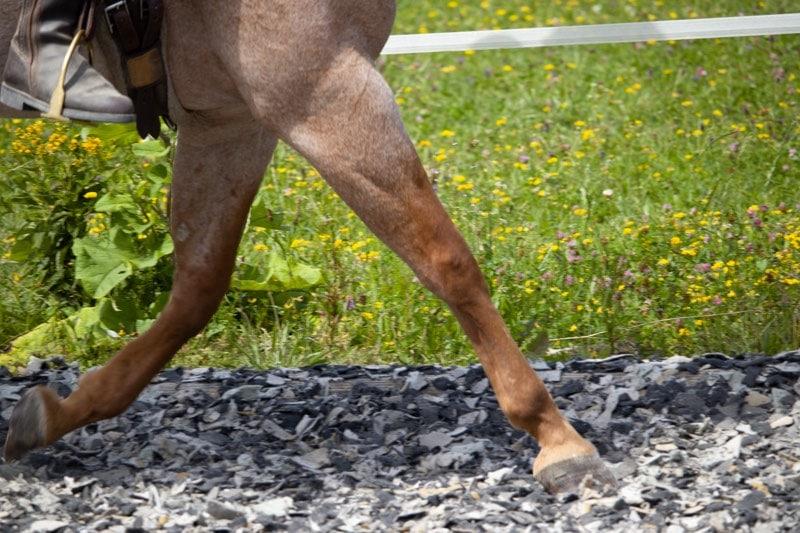 Beziehung zum Pferd aufbauen: 5 Tipps zur Beziehungspflege 4