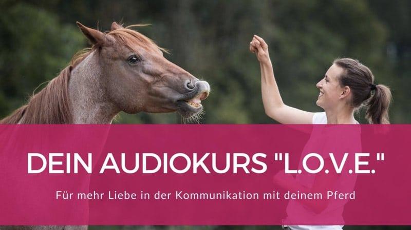 Beziehung zum Pferd aufbauen: 5 Tipps zur Beziehungspflege 1