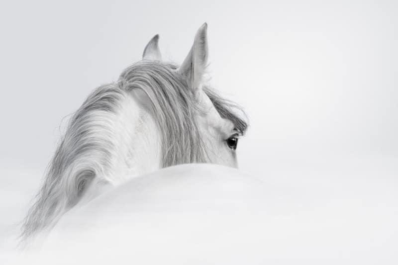 Pferde Blog für Pferdemenschen mit Herz - Wer wir sind 11