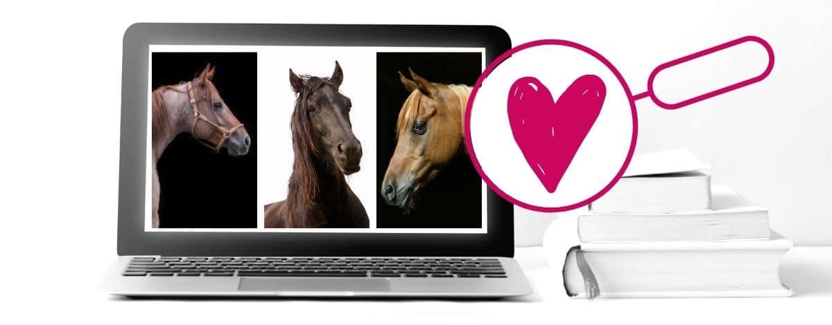 Pferde Pedia Pferderassen a bis Z