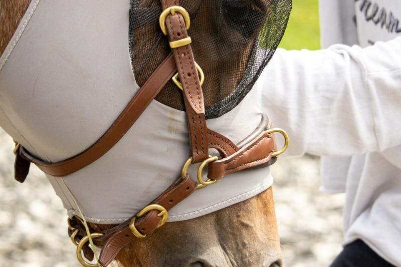Ausruestung Pferd Nogo2