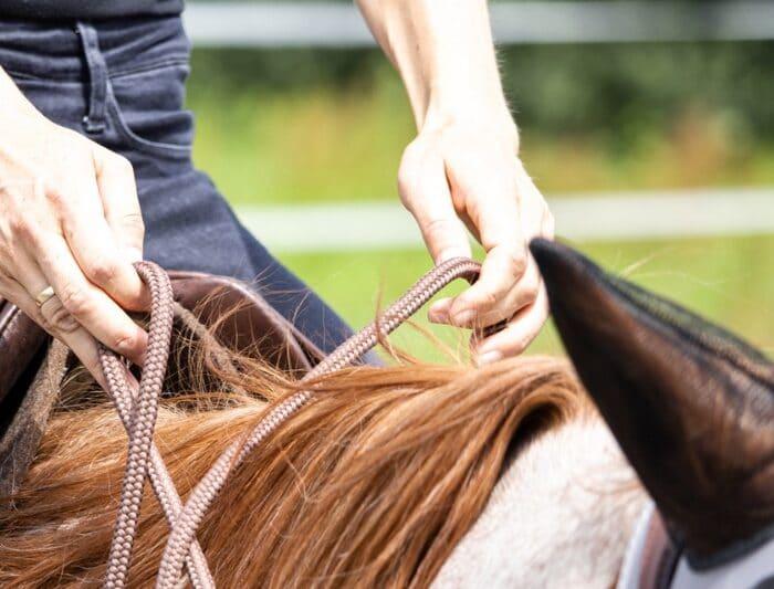 Hilfegebung beim Pferd: 5 Zutaten für eine feinere Hilfengebung beim Pferdetraining 1