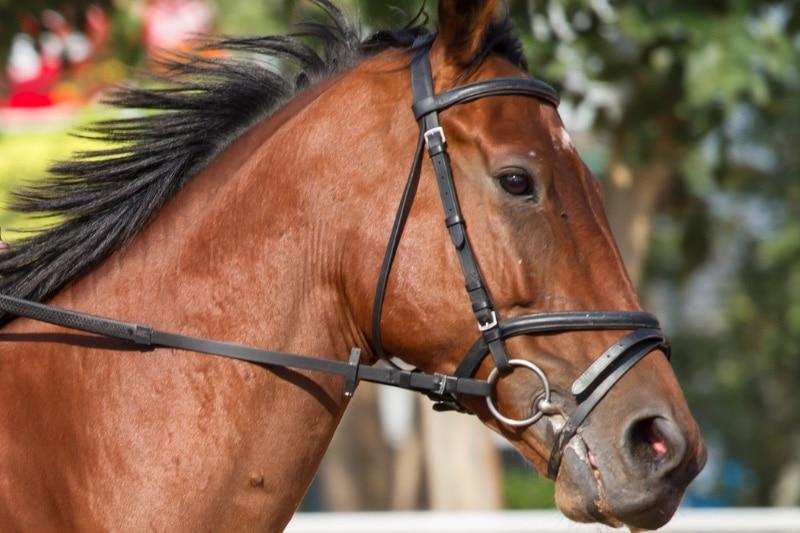 Ausruestung Pferd Nogo5