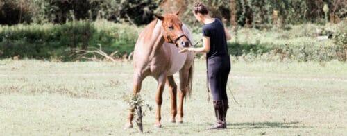 Mindset Pferdetraining Slider